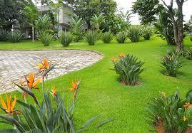 Cuidados com o Jardim – Excesso de Chuva